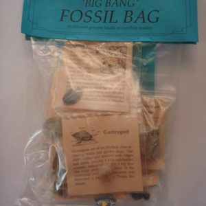 big bang fossil kit at rockhoundz.com.au