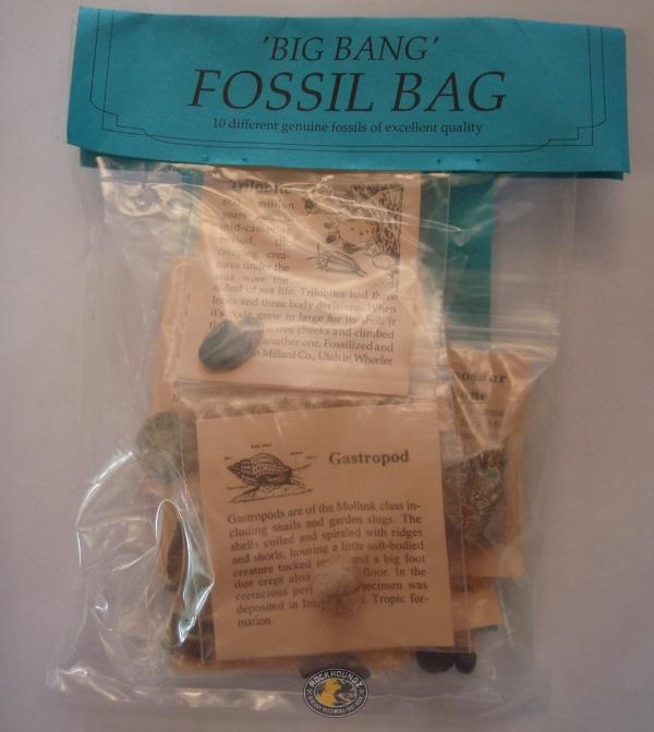 big bang fossil kit at rockhoundz.com.au