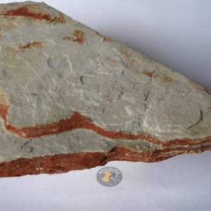 kin kin mudstone from rockhoundz.com.au