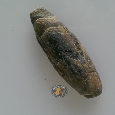 cretaceous belemnite fossil from queensland at rockhoundz.com.au